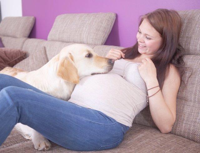 Animales y embarazo, embarazada y perro, qué hacer con la mascota