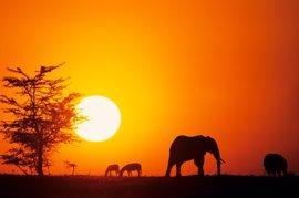 10 curiosidades sobre África para contar a los niños