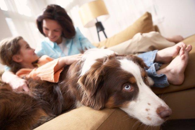 Consejos para educar a tu perro cuando tienes niños