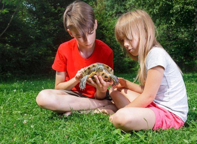 Reptiles y anfibios, mascotas poco recomendadas para los niños.
