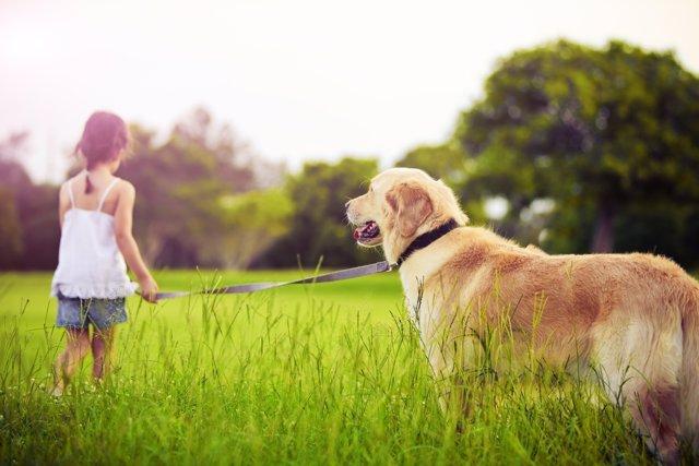Pasear al perro aumenta la responsabilidad y mejora la salud.