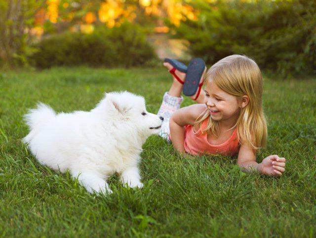 La mordedura del perro se puede evitar con mucho cuidado.